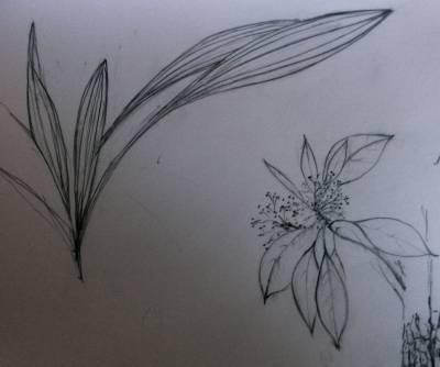 ArboLife-events-nadine-plantes-sauvages-croque-et-croquer