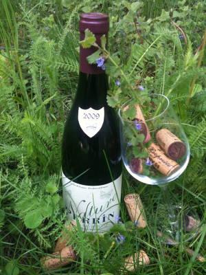 ArboLife-events-nadine-plantes-sauvages-balade-apero-et-degustation-de-vins-naturels