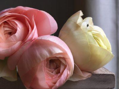 ArboLife-events-rose-jasmin-hiver