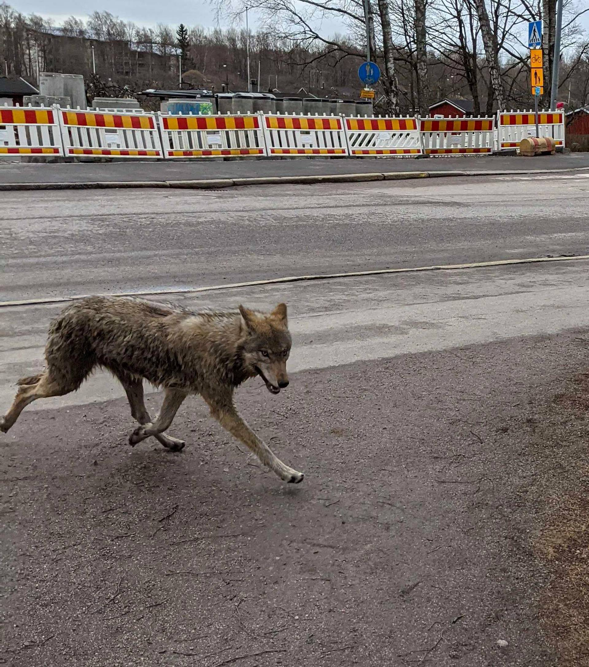 wolfy02.jpg