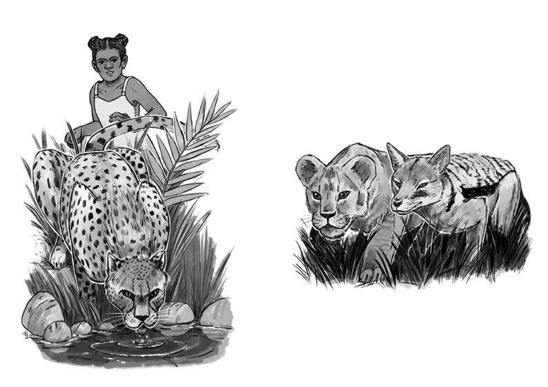 'The Cheetah's Whisker' and 'The Jackal and The Lion' illustrated by Joe Lillington