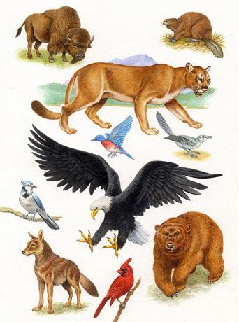 arena-illustration-philip-hood-11-native-american-animals
