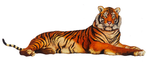 arena-illustration-philip-hood-12-tiger