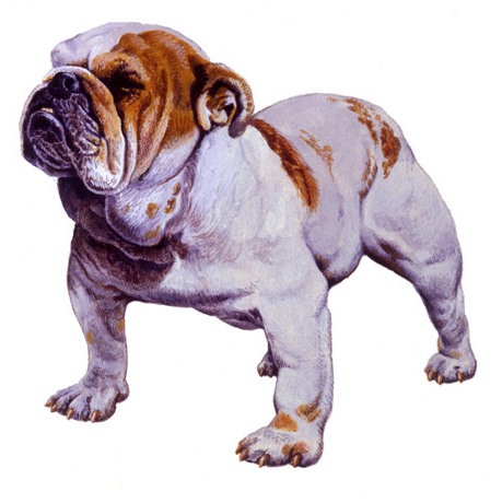 arena-illustration-philip-hood-14-bulldog