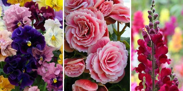 Flores ideais para decorar no inverno