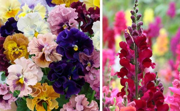 Flores ideais para o outono
