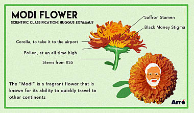 ModiFlower