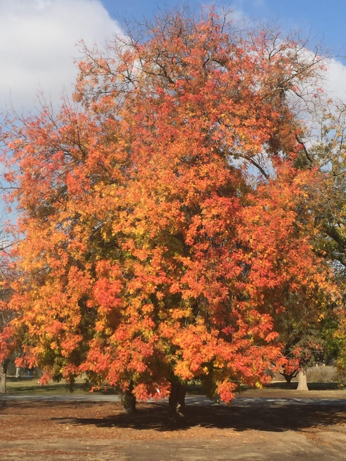 Fall at Hart Memorial Park