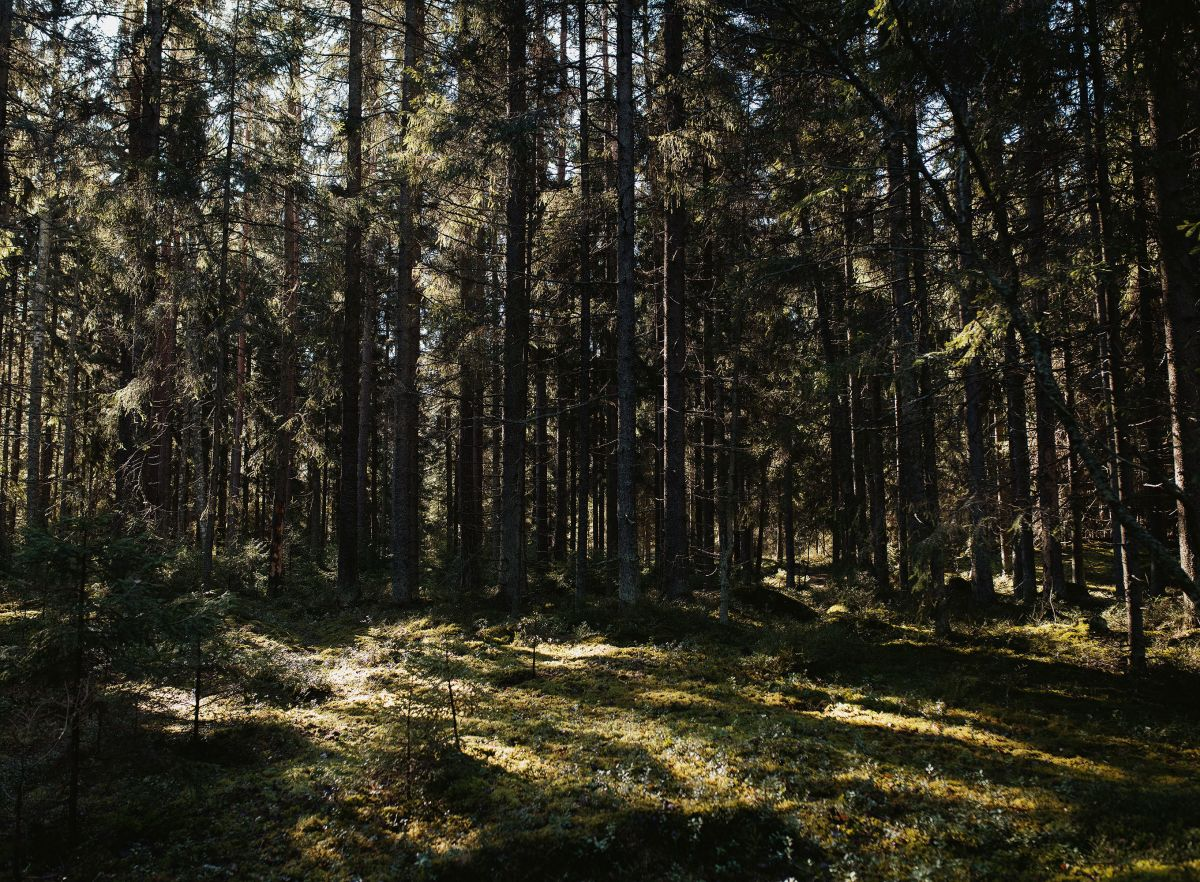 A Forest Christmas at Artek Helsinki