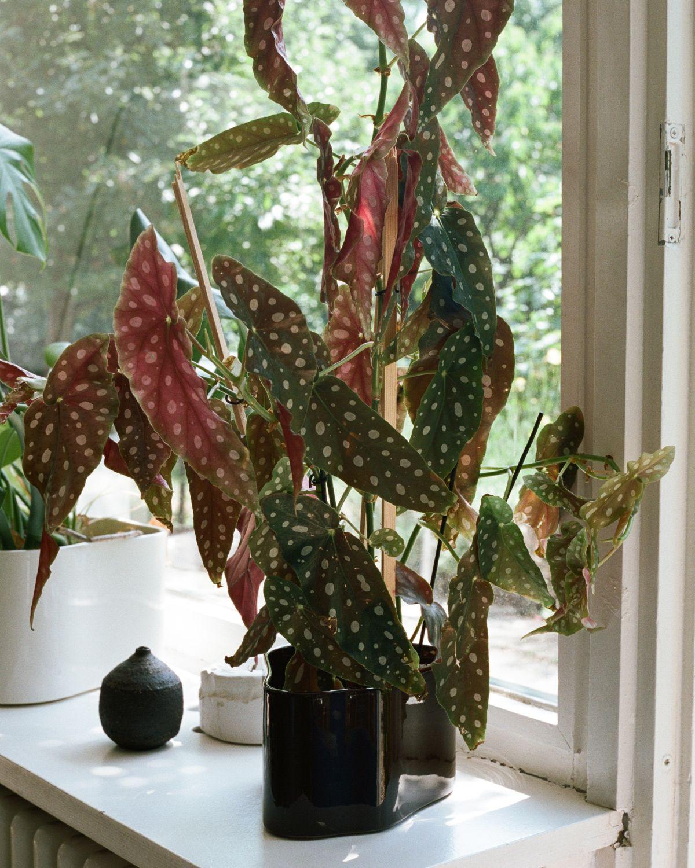 Riihitie_Plant_Pot_A_dark_brown_3