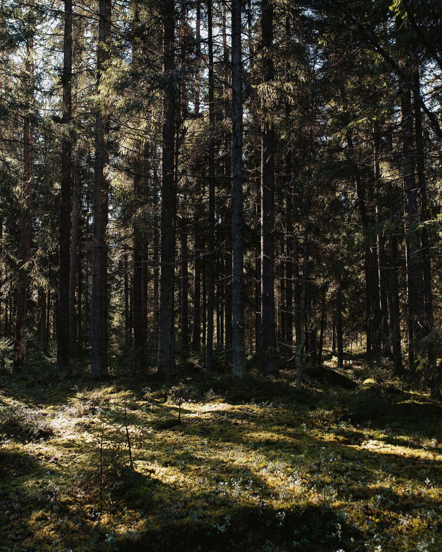 Winter2020_Sara_Karlsson_Artek-Forest-Linlo-Kirkkonummi_web
