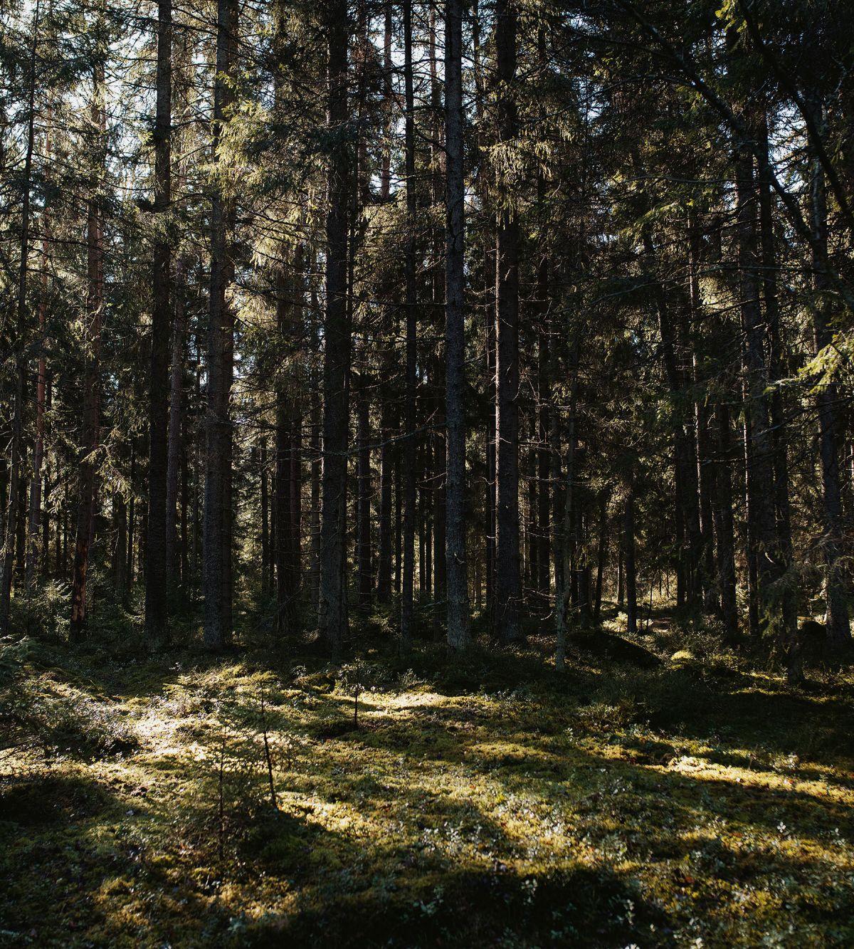 Skogen är julens tema i Artek Helsinki