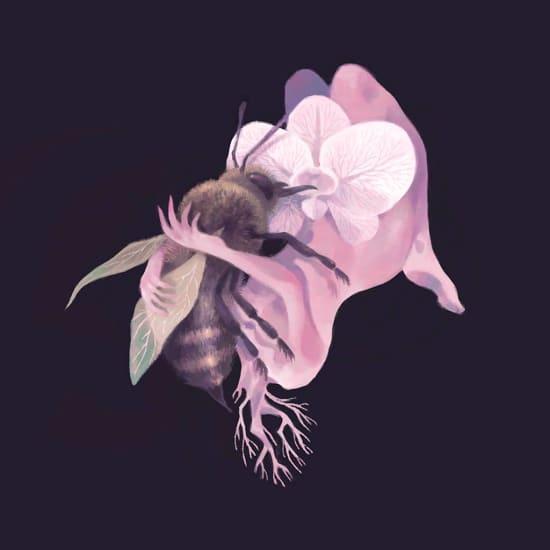 Illustration by Amber Shih