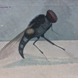 Insect - The Fly