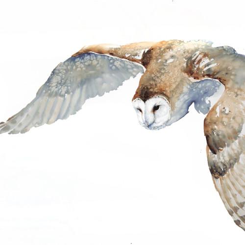 Karl Martens - Barn Owl