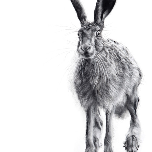 Lucy Boydell - Curious Hare