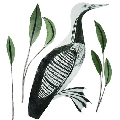 Beatrice Forshall - Black Throated Diver (Unframed)