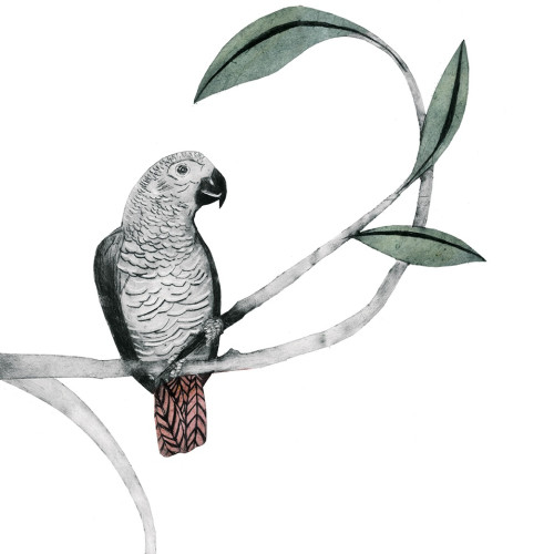 Beatrice Forshall - African Grey Parrot
