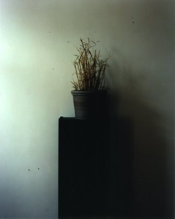 <span class=%22title%22>Untitled #261 (Black plant stand)<span class=%22title_comma%22>, </span></span><span class=%22year%22>2013</span>