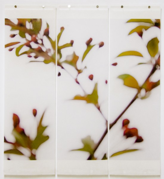 <span class=%22title%22>Crabapple, No. 4<span class=%22title_comma%22>, </span></span><span class=%22year%22>2008</span>
