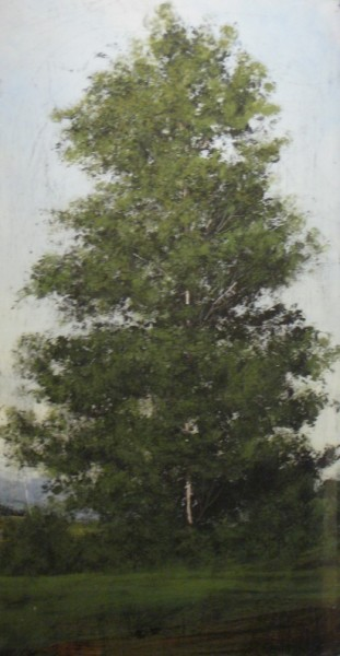 <span class=%22title%22>Single Birch Tree<span class=%22title_comma%22>, </span></span><span class=%22year%22>2009</span>