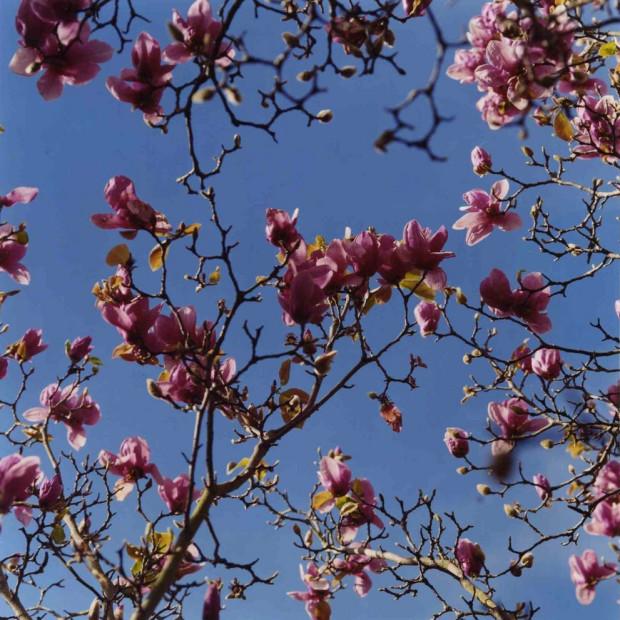 Lisa Eisner - Oscar's Tree No. 1, Los Angeles