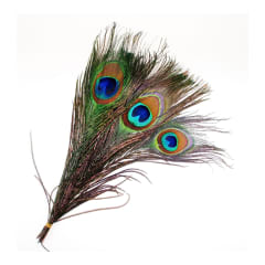 Shamrock Peacock Feathers Pkt 5