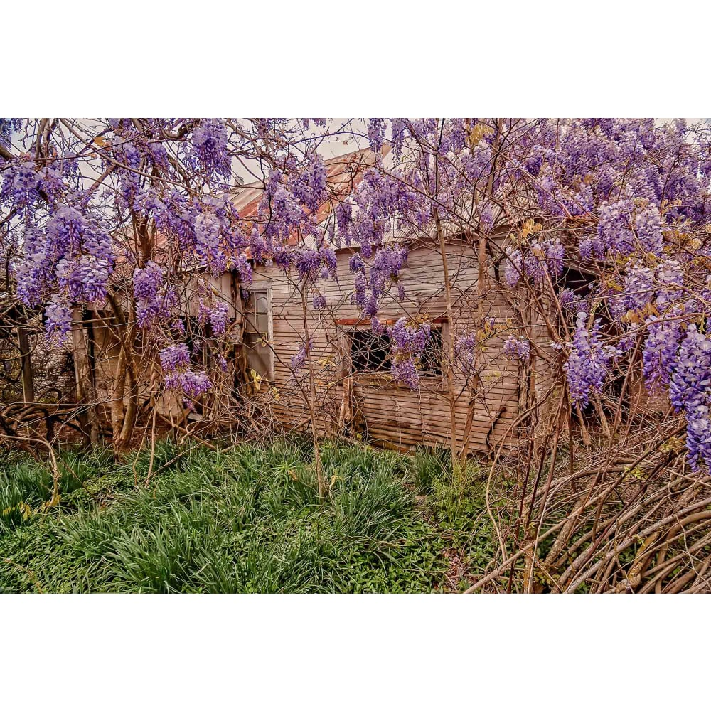 products/jay-mcdonald-wrapped-in-wisteria.jpg