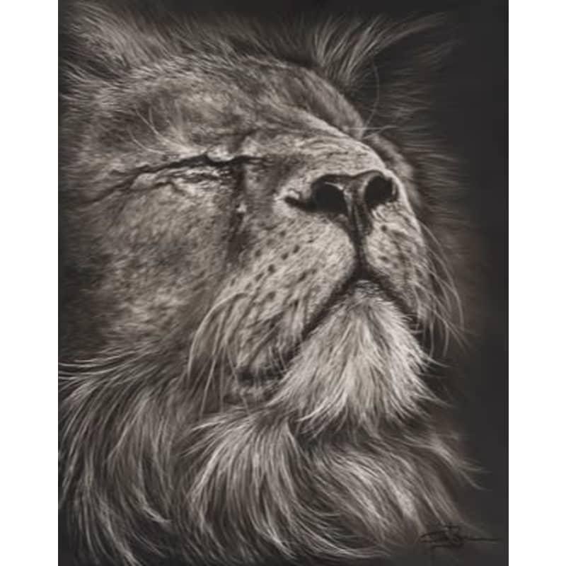 products/clint-brannon-breaktime--lion.jpg