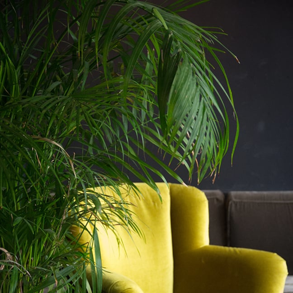 products/heather-chilson-green-chair.jpg