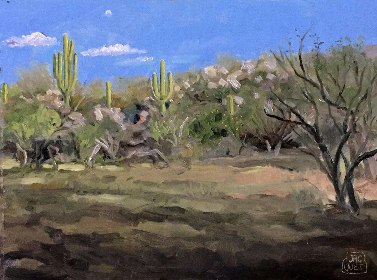 Catalina State Park, Tucson AZ