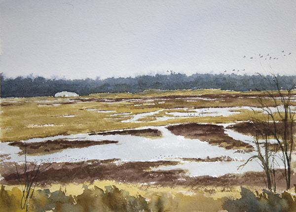 Goose Pond - February, Ducks