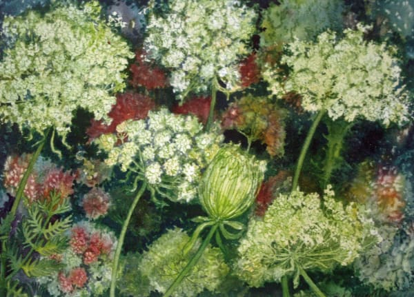 Queen Ann's Lace Study I
