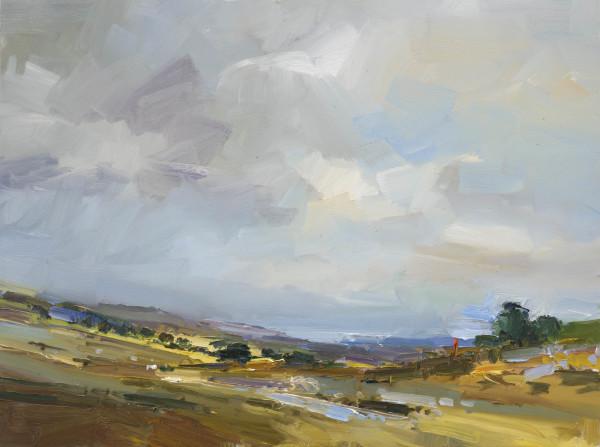 29. Early Summer on Dartmoor II