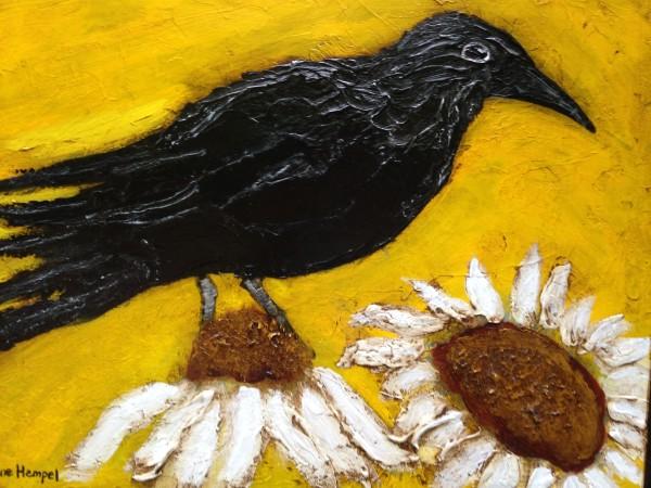 Black birds and Daisy