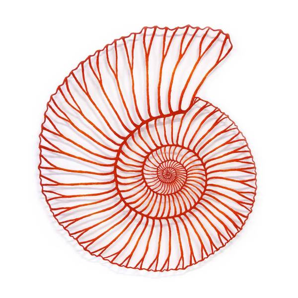 Red Ammonite
