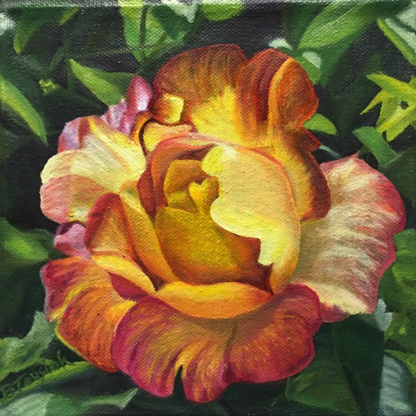 Joseph's Coat of Many Colors Rose (Dad's rose)
