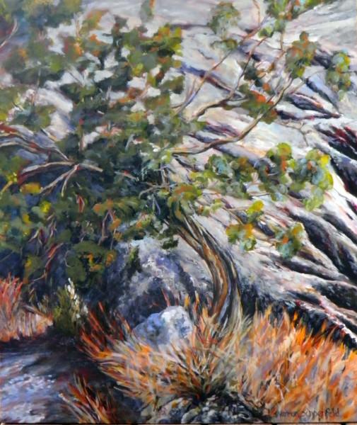Cliff Hanger - Joshua Tree National Park