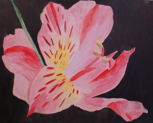 Single Pink Lily 2