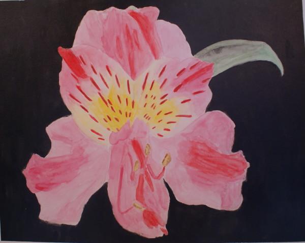 Single Pink Lily 1