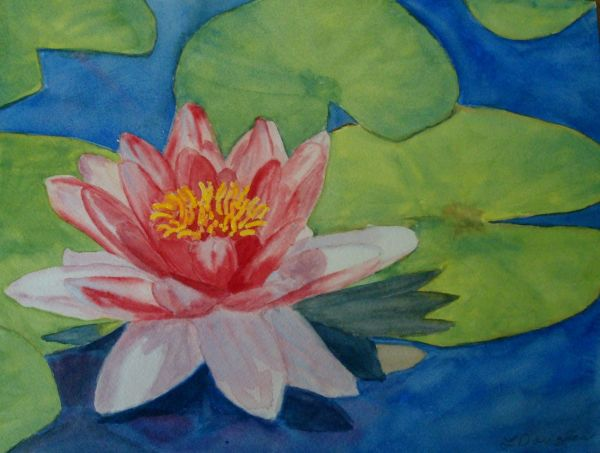 Waterlily 2