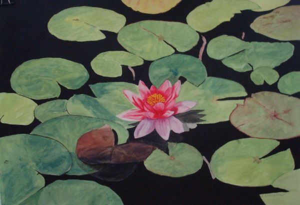 Waterlily 3