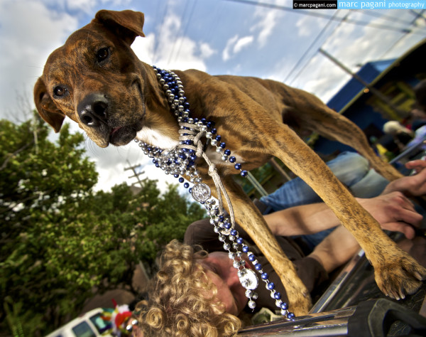 Watchdog & Drunk Owner - Mardi Gras Day