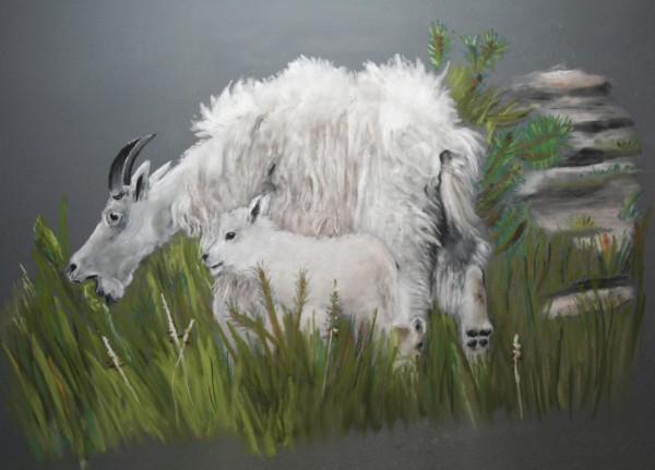 Mountian Goats