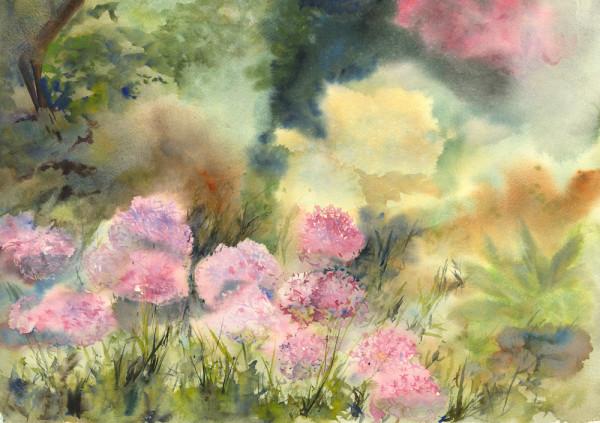 Alliums in the Garden