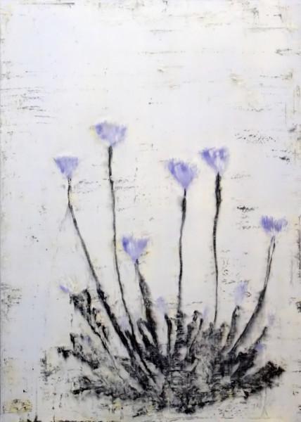 Ao keshi (Blue Poppy)