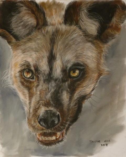 African Wild Dog study