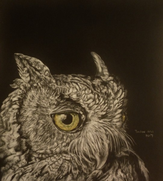 Fly By Night (Great Horned Owl)