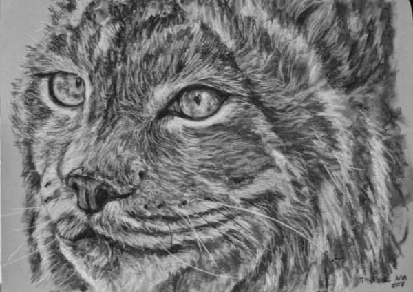 Canadian Lynx Study (Kiki)