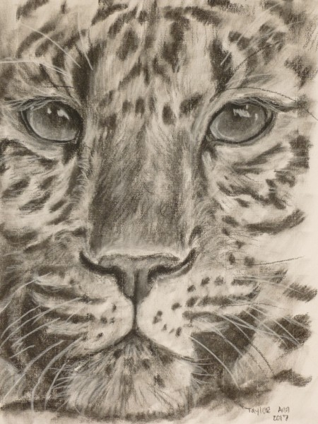 Leopard Face Study (Charcoal)